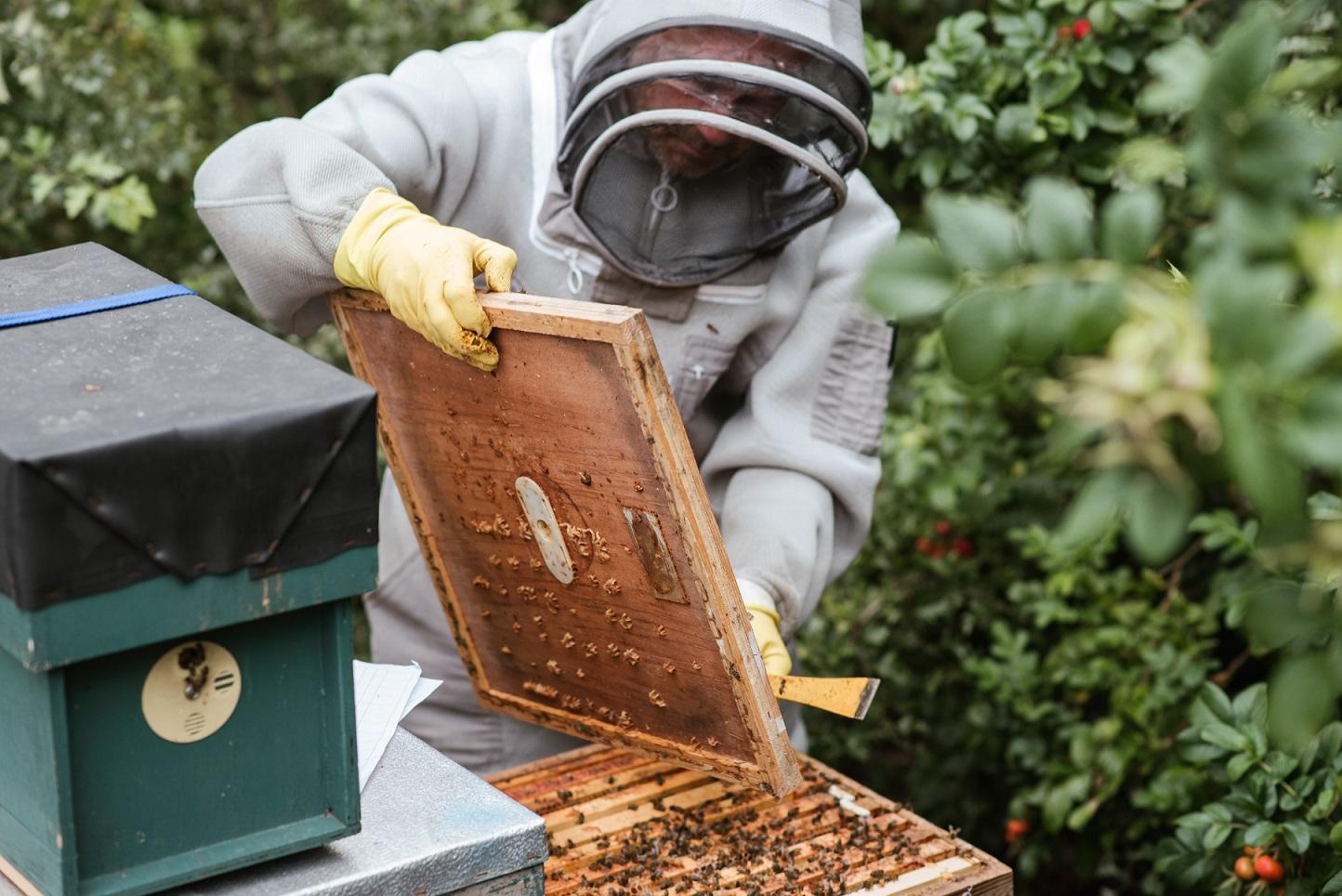 Čebelarski razpisi