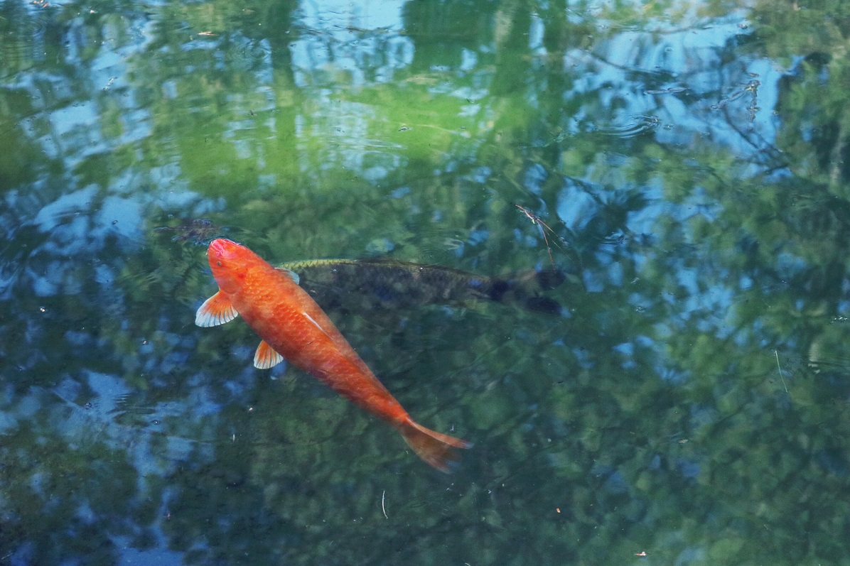 Razpisi v akvakulturi