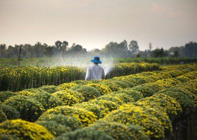 Nepovratna sredstva za mlade kmete, ki so namenjena za zagon dejavnosti