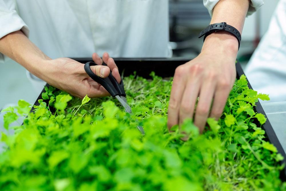Kmetijstvo in toplogredni plini