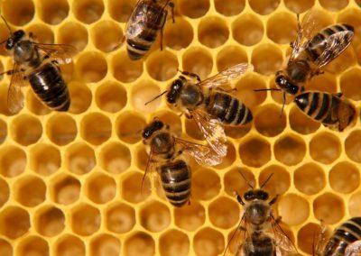 Nepovratna sredstva za sofinanciranje zdravil, dovoljenih v ekološkem čebelarstvu za zatiranje varoje