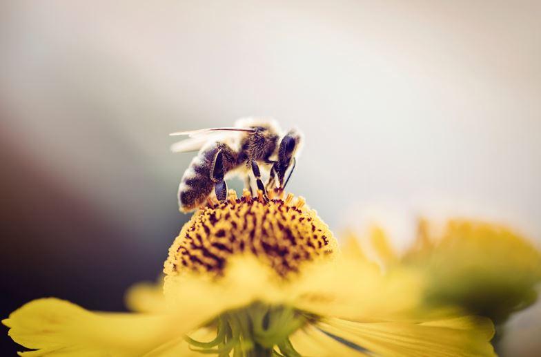 Javni razpisi čebelarstvo